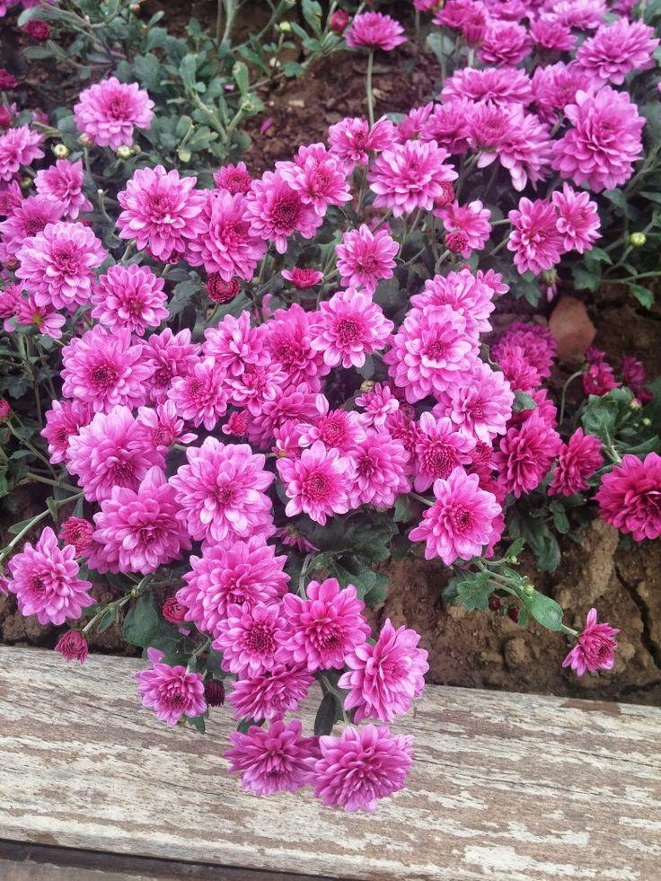 Çiçekler bir şölen yaşamda.. Renklerin en büyük orkestrası..