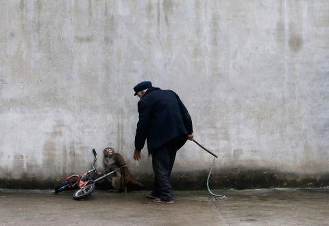 Le sorti degli animali detenuti nei circhi si giocheranno martedì 20 giugno con il voto della 7°Commissione del Senato. Scriviamo ai senatori indecisi. Urgente