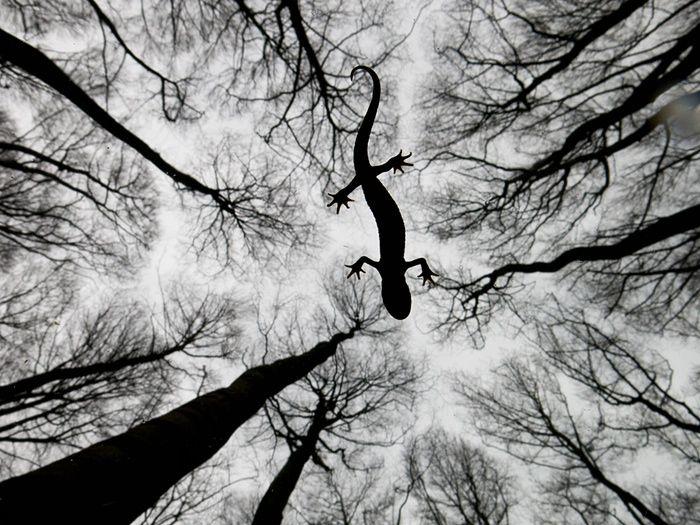 Veja as vencedoras de prêmio internacional de fotos de vida selvagem | RedeTV! Em rede com você.