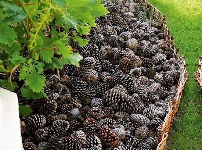 tip if you use pinecones as mulch cats wont use your flower bed as a litter box putting pine cones in your indoor plants also keeps cats away - Garden Ideas To Keep Animals Out