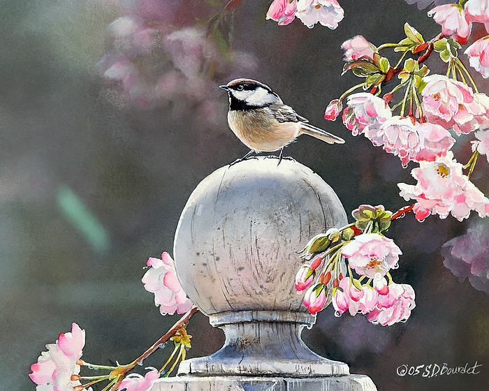 Songbirds in Garden  -  Watercolor Paintings of Cute Little Birds  - Chickadee with Cherry blossoms -  SongBirds Watercolor Paintings  5