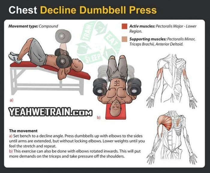 Chest Decline Dumbbell Press - Fitness Exercise Sixpack ...  Chest Decline D...