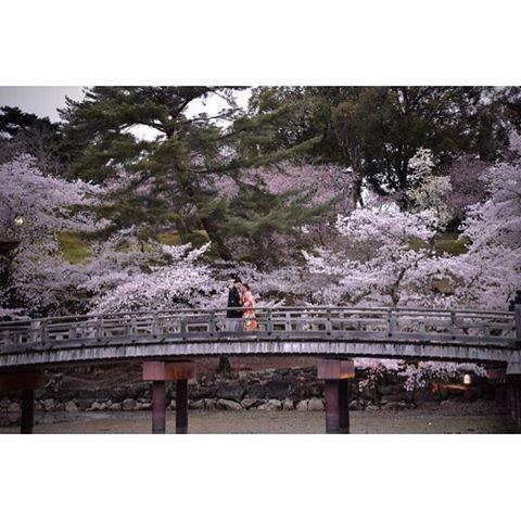 【kikiphotoworks】さんのInstagramをピンしています。 《和装前撮り桜 ・・・ 日没後の撮影シリーズです。  日中は明るすぎて桜と人物を綺麗に写すのが難しいです。できなくは無いですがワンシーン撮るのに5分くらいかかってしまい時間が勿体ないです。  なので可能な場合は日没後に撮影します。 ・・・  #プレ花嫁 #結婚準備 #花嫁 #花嫁準備 #結婚 #和装 #結婚式 #結婚写真 #桜 #さくら #綺麗 #可愛い #ヘアスタイル #髪型 #婚約 #前撮り #記念写真 #ウエディング #和婚 #和装ウエディング #instawedding #weddingphotography #ig_wedding》