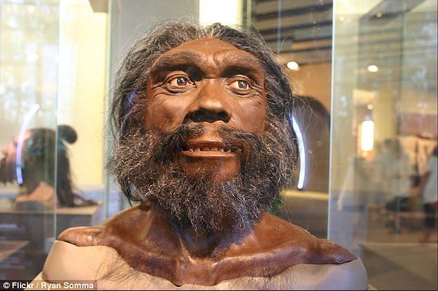Homo heidelbergensis (artist's model) lived in Africa, Europe and western Asia between 600...
