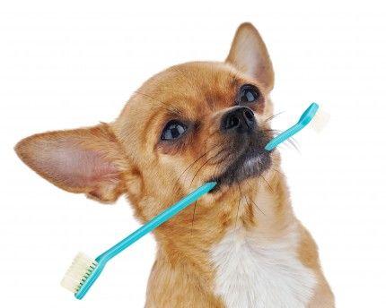 Bättre tandhälsa för dig & ditt djur