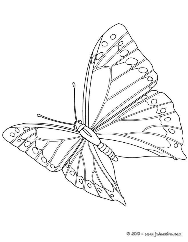 coloriage papillon en plein vol animal coloring pagescoloring