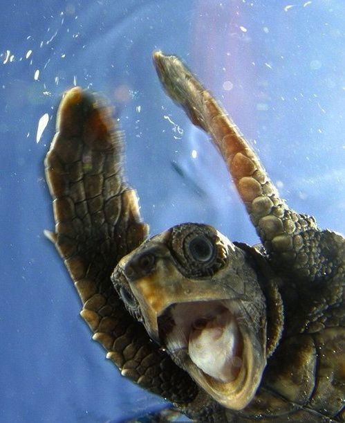 Sea Turtle Fun