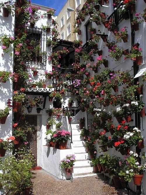Lovely A House Covered In Potted Plants Can Be Amazing And Cheerful.