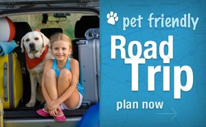 Whether you're running errands in your neighborhood, or embarking on a cross-country road trip, if you're taking your dog along, there are a few essential items that should always be in your car. You just never know when a flat tire, family emergency, or unexpected opportunity might lead to a change of plans. Having a few vital …
