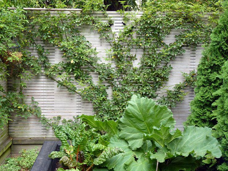 Garden Design Nursery 90 best thorndon ~ designedhedge images on pinterest | formal