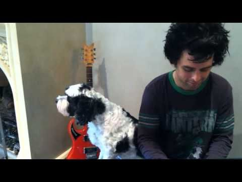 """Even if you're not a Green Day fan (and why not?), you'll love this video of """"Gloria"""" with Billie Joe on piano and his dog Rocky on vocals."""