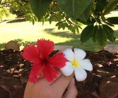 Hawaii and Flowers