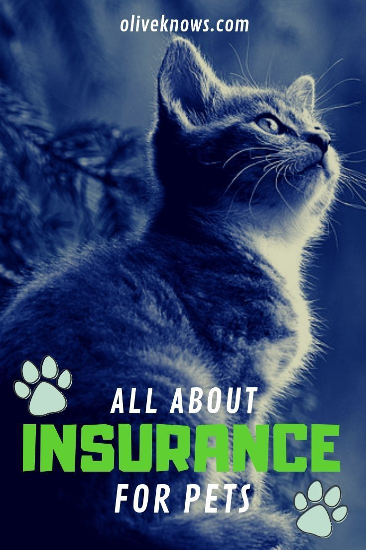 What You Need To Know About Pet Insurance Cat Insurance Pets