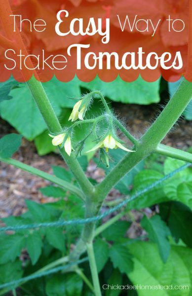 Easy Way to Stake and Support Garden Tomatoes Homesteading  - The Homestead Survival .Com