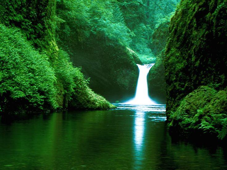 Forest_Waterfall_xl.jpg (1024×768)