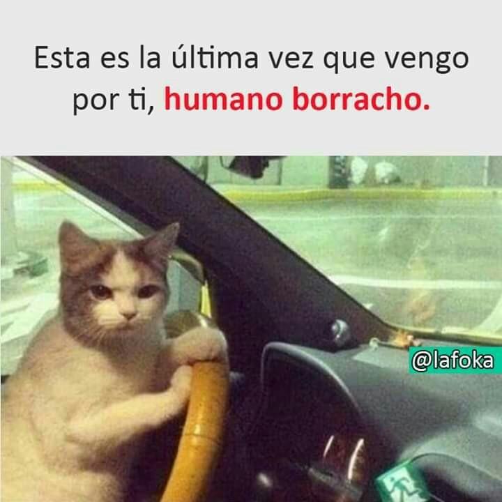 Humano Borracho Es La Ultima Vez Expertoanimal Mundoanimal Reinoanimal Animales Naturaleza Mascotas Anima Memes Graciosos Memes Memes Divertidos