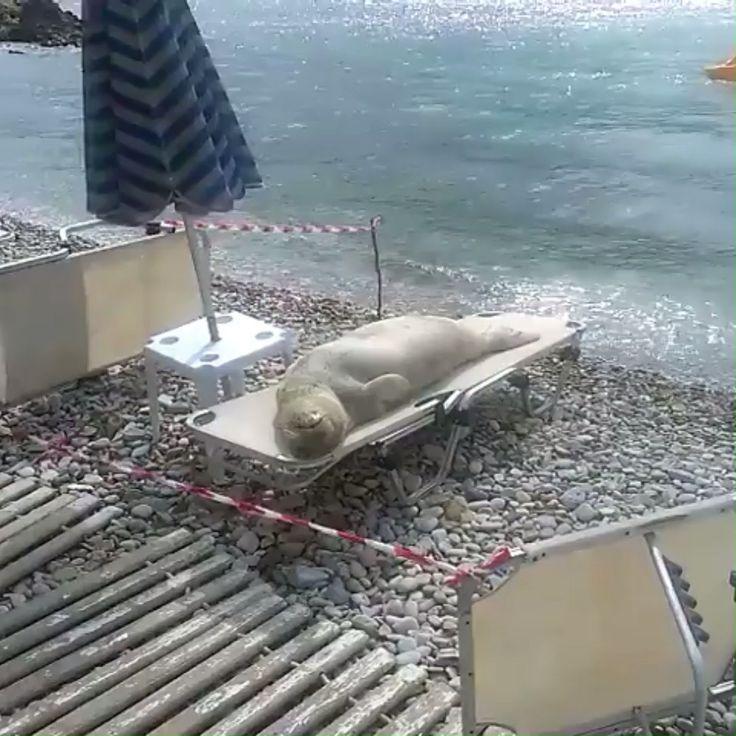Relaxando na praia! 😂 – #chillen #strand   – süße Tiere Photo