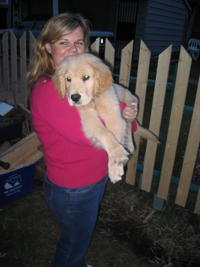 The Most Simple Diy Golden Retriever Puppy Training Inspiration Of All Time Training Your Gol In 2020 Golden Retriever Puppy Training Golden Retriever Retriever Puppy