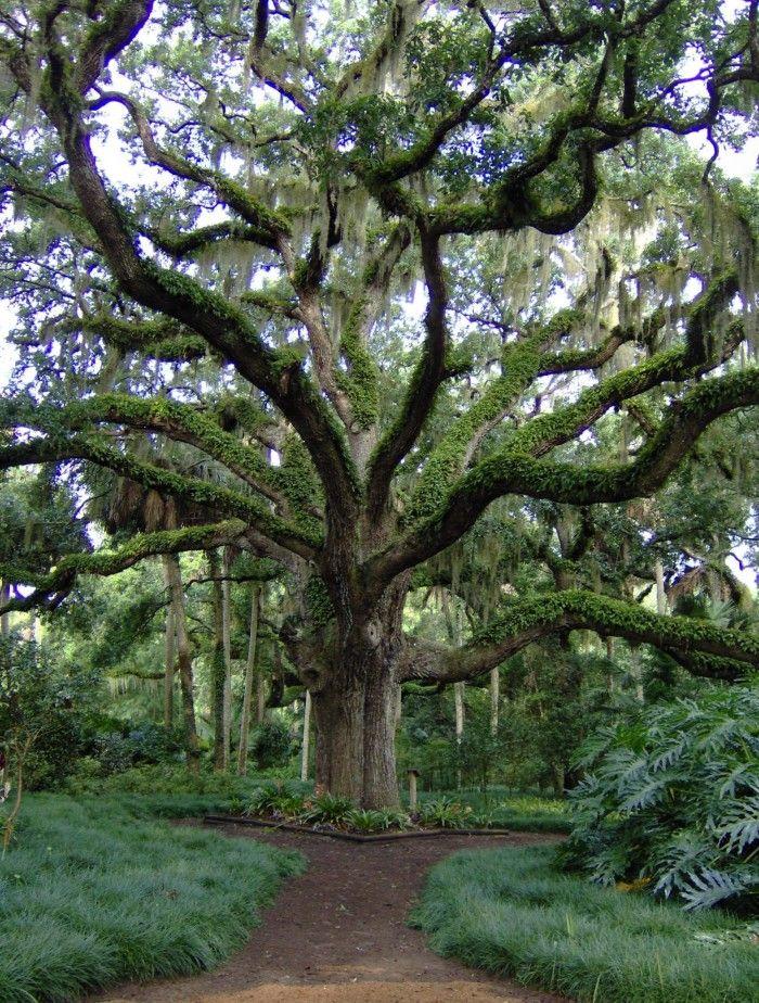 Mi un árbol en la casa