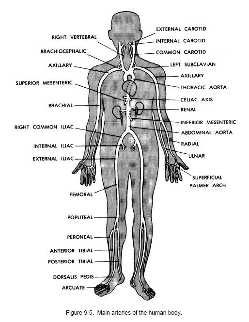 The Human Body An Orientation Coloring Book | Coloring Pages