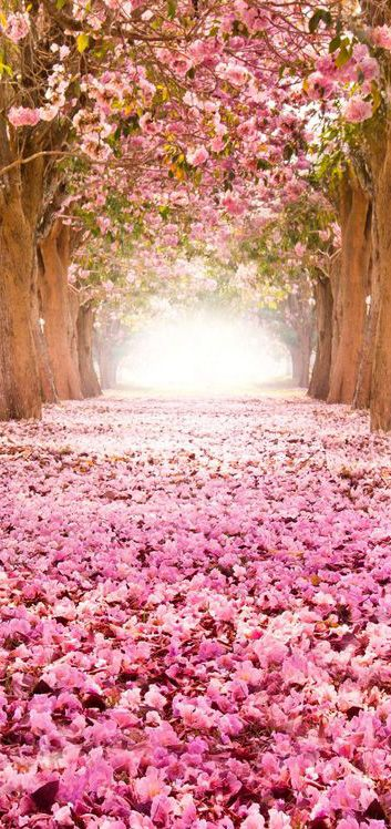 Carpet of pink flowers