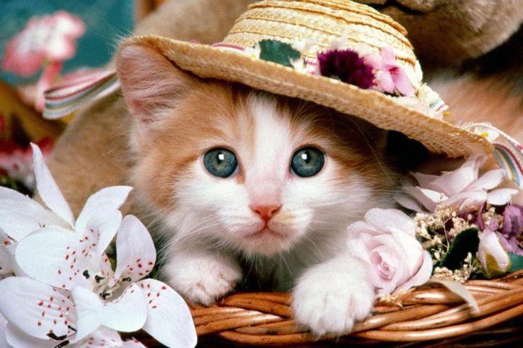 gituaja.com - nih alasan kalo mau melihara kucing (cover)