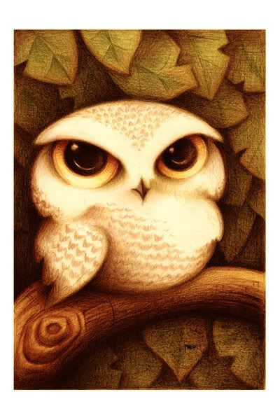 Another owl pic     #