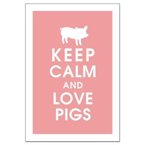 pigs: Piggy Piggy, Mini Pigs, My Life, Minis Pigs, Pigs 3, Pigs Posters, So True, Keep Calm, Pigs Pigs