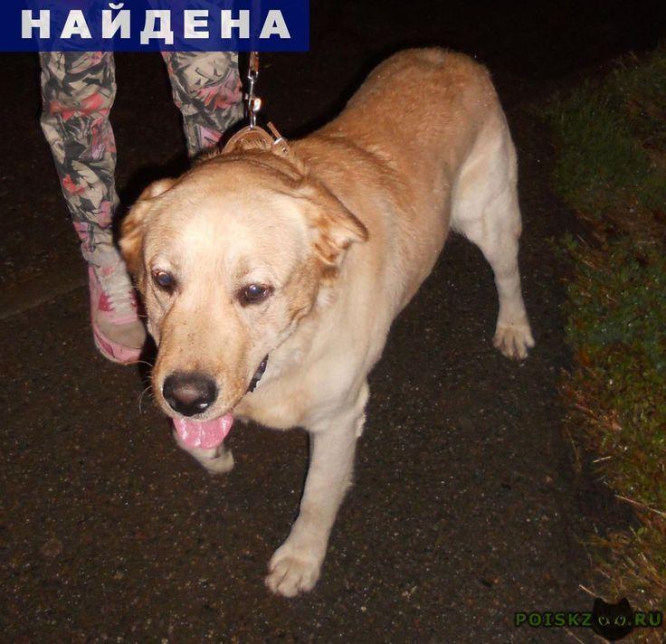 Найдена собака кобель нашли лабрадора гидрострой г.Краснодар http://poiskzoo.ru/board/read31060.html  POISKZOO.RU/31060 Краснодар. .. сентября вечером в сквере пограничников (Гидрострой) найден лабрадор ретривер, молодой кобель. Ошейника не было, но след от него имеется. Есть особая примета. ХОЗЯИН, ОТЗОВИСЬ.   РЕПОСТ! @POISKZOO2 #POISKZOO.RU #Найдена #собака #Найдена_собака #НайденаСобака #Краснодар