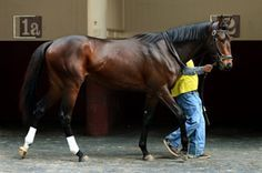 Orb(2010)Malibu Moon- Lady Liberty By Unbridled. 3x4 To Mr. Prospector, 5x5 To Bold Ruler. 12 Starts 5 Wins 3 Thirds. $2,612,516. Won 2013 Ky. Derby(G1), Florida Derby(G1), Fountain Of Youth S(G2), 3rd Belmont S(G1), Travers S(G1). Entered Stud At Claiborne Farms In 2014.