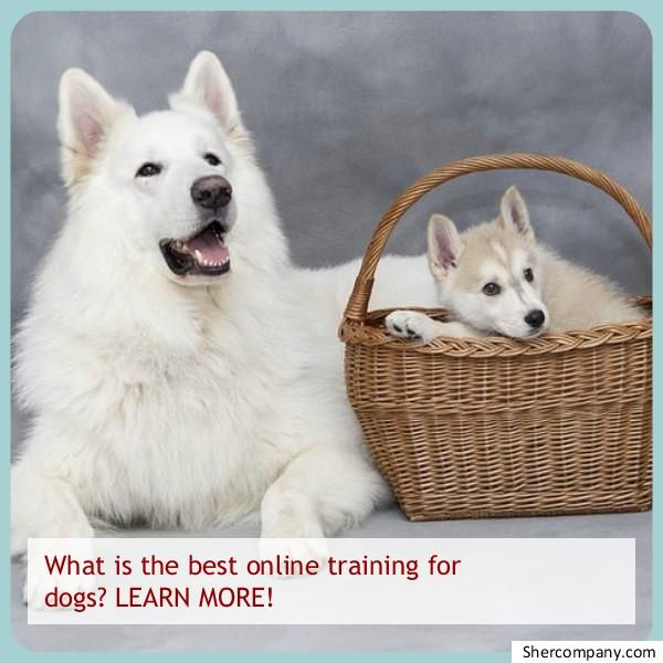 Dog Training For Dummies Check Out The Pic For Lots Of Dog