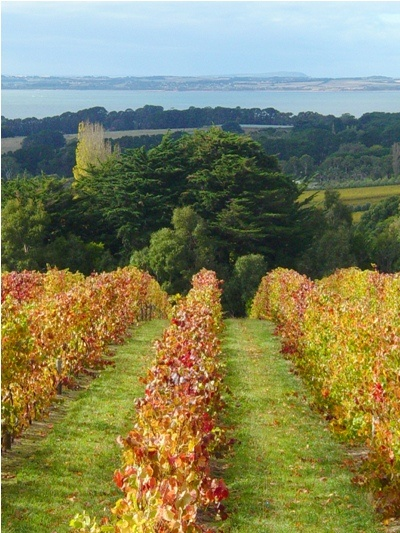 Mornington Peninsula: With a temperate, maritime influenced climate, Mornington is truly one of Australia's most visually spectacular and lifestyle rich of wine regions.  http://www.winemarket.com.au/WINEMARKET-101/THE-MORNINGTON-PENINSULA-WINE-REGION