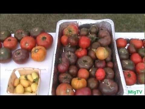 How to Save Tomato Seeds - Seed Saving Series