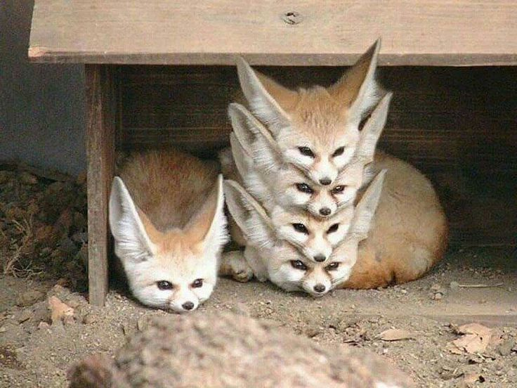 Poorly organized fox storage- hahaha! So sweet!