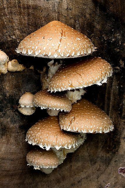 Best 25 Mushroom Pictures Ideas On Pinterest Mushroom