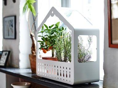 Mini-Gewächshaus von Ikea