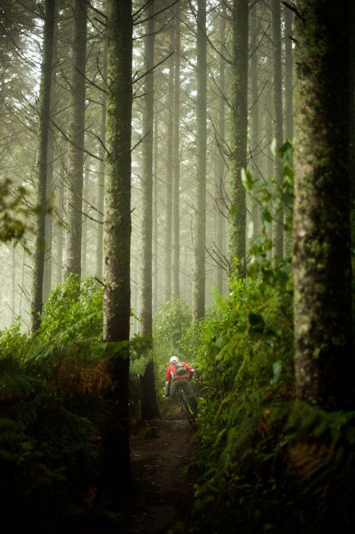 forest ride. Redwood Forest, North Island, New Zealand.  Amazing tracks. So so glad to have experienced this. Mountain bike NZ