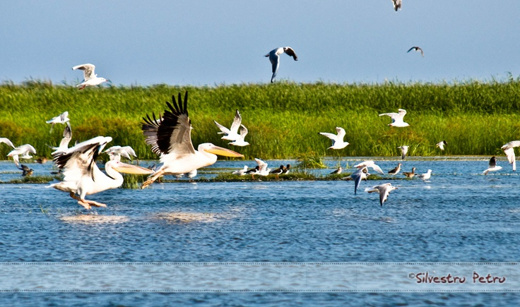 Sacalin Island, The Danube Delta