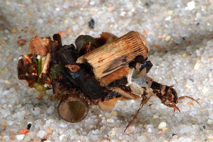 Vårfluen er en fantastisk tryllekunstner, arkitekt og smykkemager. Tag på jagt efter det lille insekt ved søer og åer.  Fuldstændig forvandling. Mange insekter lever helt forskellige steder og på helt forskellige måder som larve og voksen. Det gælder for eksempel vårfluerne. De voksne sværmer rundt over vandhuller og vandløb, mens larverne lever et helt andet og længere liv nede under vandoverfladen. I kan let fange larverne og se deres fantastiske huse.  Skrøbelige voksne og stærke børn. De…