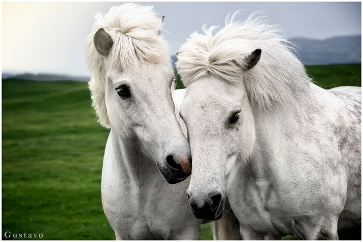 Horses by Gustavo Rodríguez on 500px