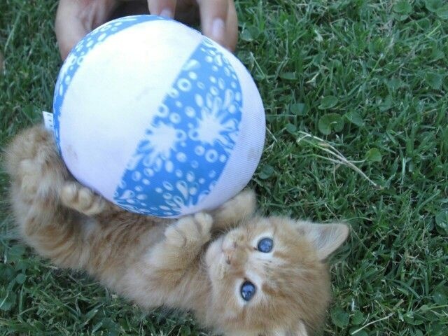 Playing with a ball