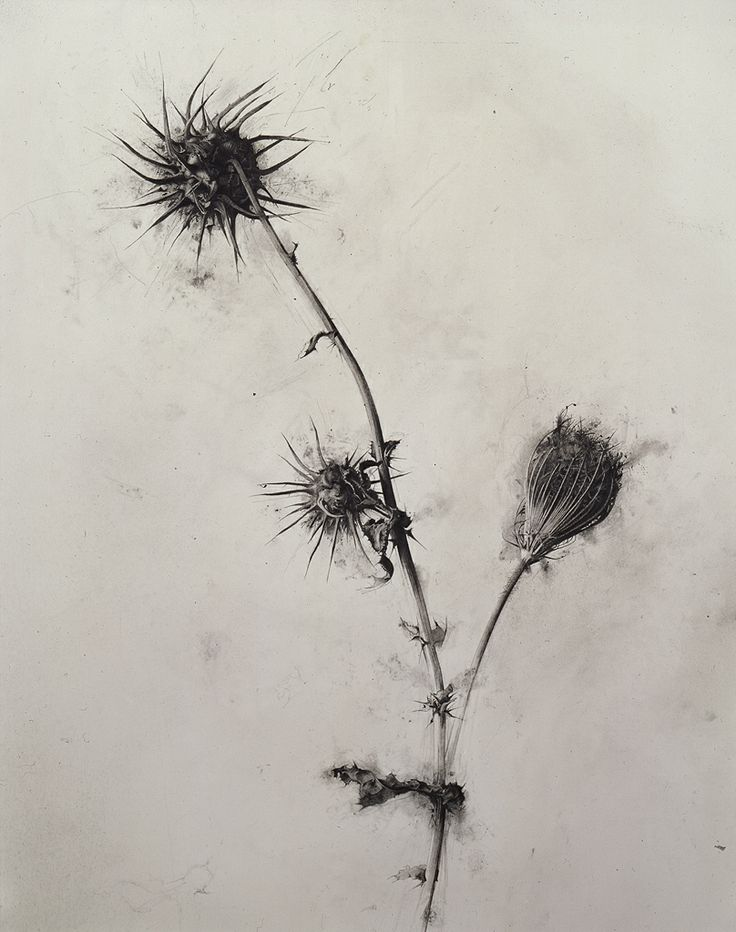 "Israel Hershberg ""Thorn"" 1989. Pencil on paper, 73 x 58 cm"