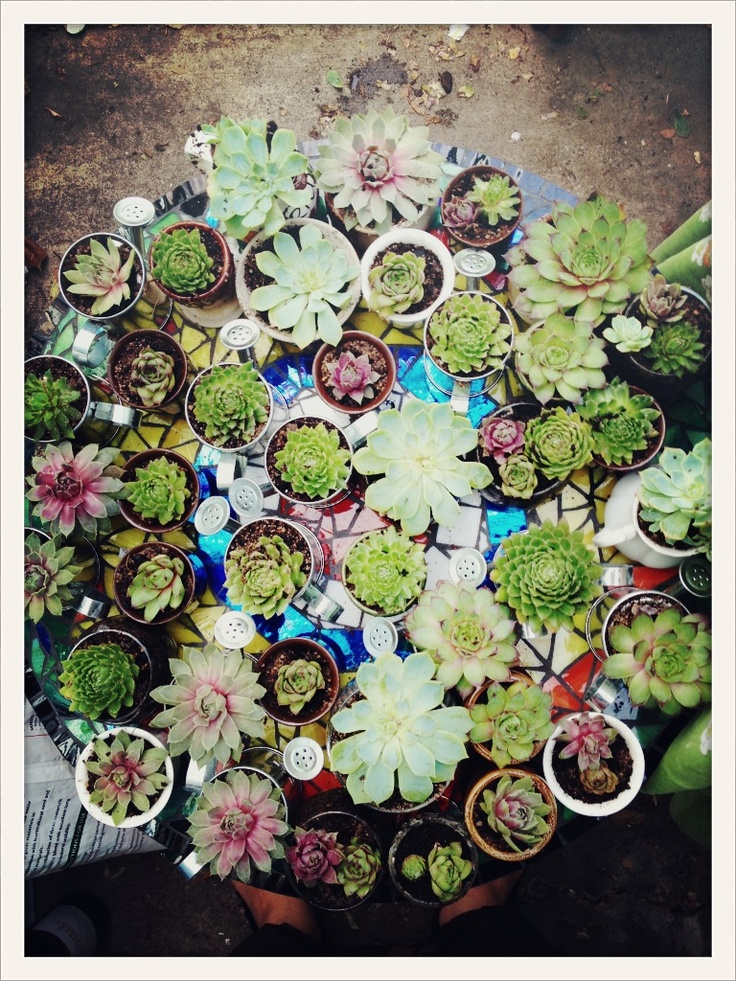 DIY Wedding Favors: Mini Succulents in an assorted bunch of op shop mini cups & pots. All up cost me $60