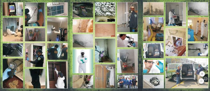 Mold isn't just unsightly, it can also cause health problems. Once #mold has a #foothold in your #home or place of #business, it can quickly spread—creating #mold_odor, cause #irreparable_harm to #damage to building contents and #structure, and be #hazardous to your #health.