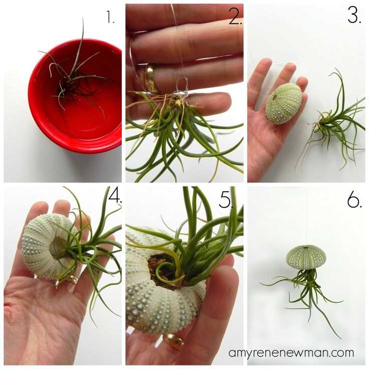 Jellyfish Air Plant Holders 4 Pack: Pin By Celia Sy On Plants