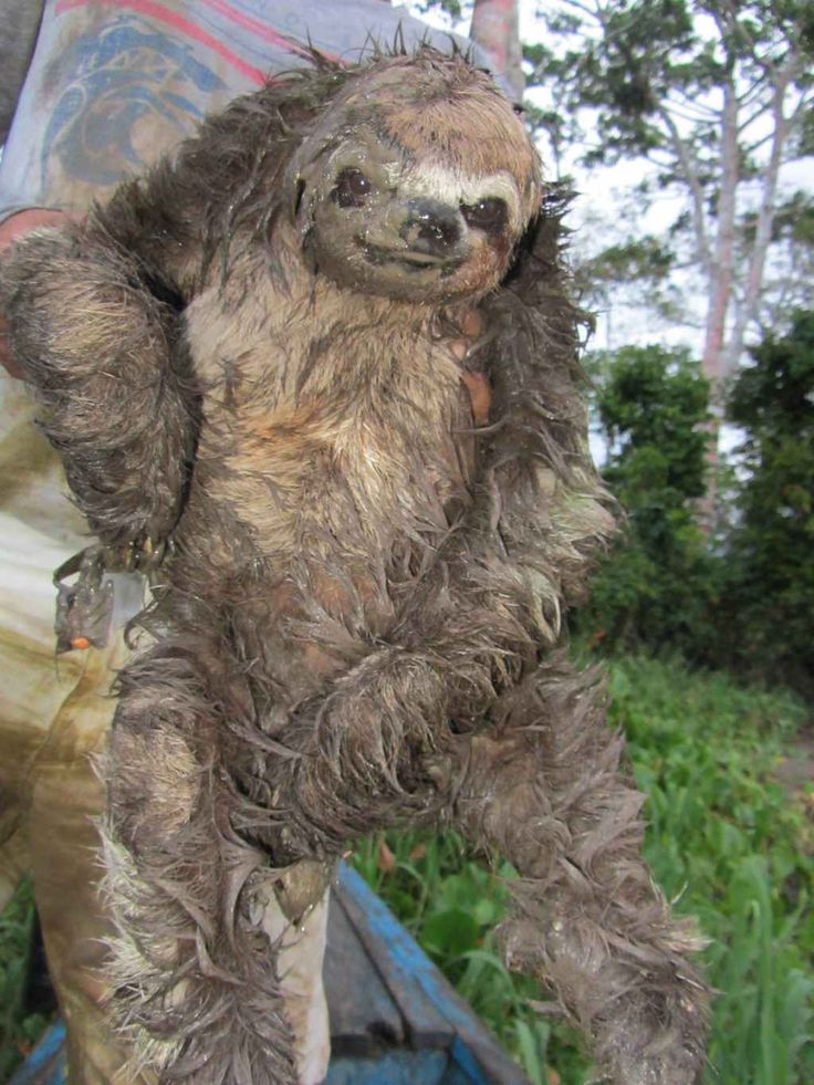Big Sloth's Olympic dreams were squelched after he ...