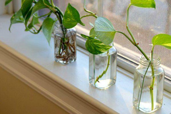 A BEAUTIFUL LITTLE LIFE: Growing Plants in Glass Bottles