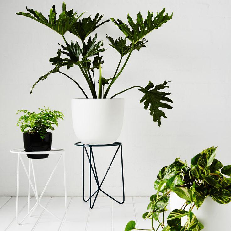 106 Best Macetero Images On Pinterest Plant Stands Pots