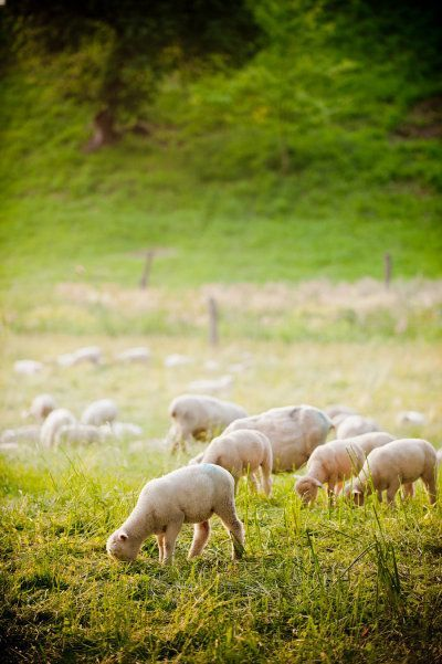 10 Sheep Pins you might like