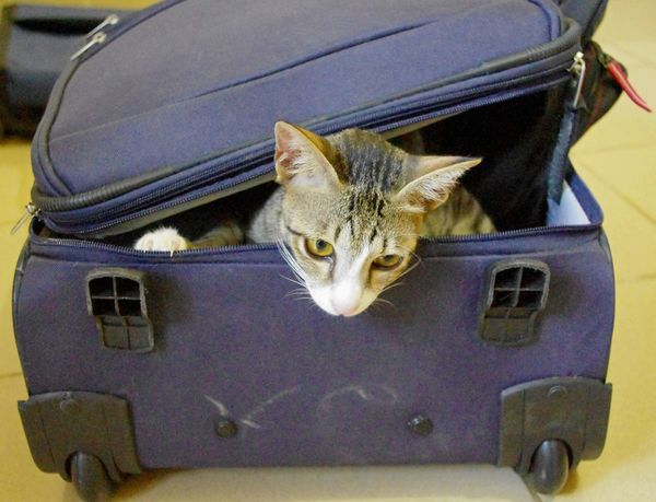 Top 6 Cat-Friendly Hotel Chains | for the next power outage.